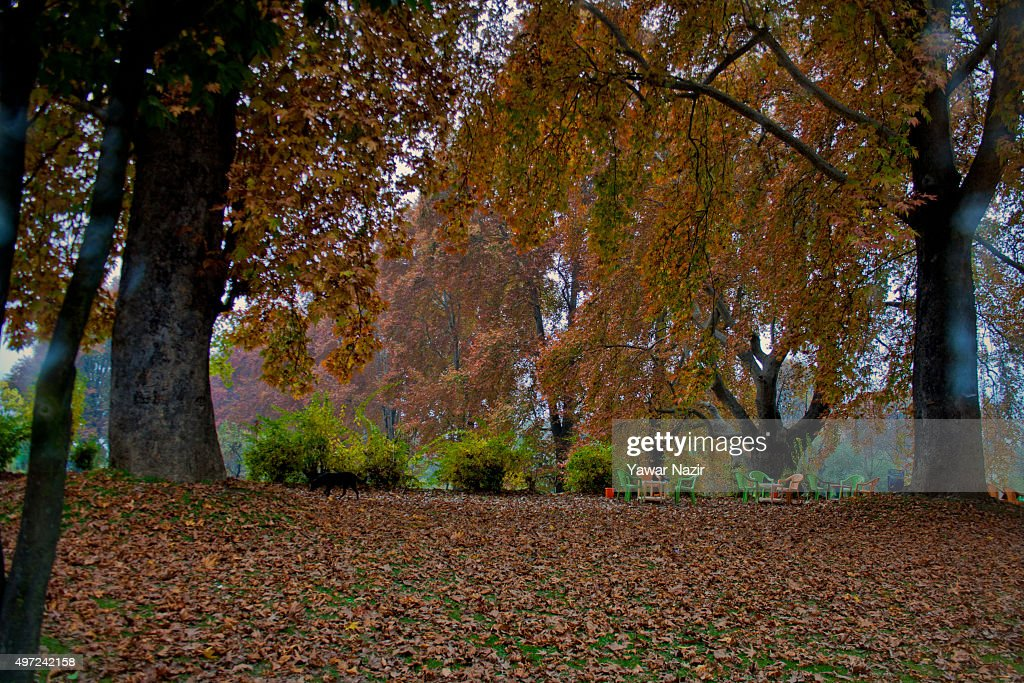describe autumn season in india Autumn: ashwina or ashvayuja (kwar, asauj) and kartika ~ late- september, october & mid-november: mild temperatures 19-25 degrees celsius autumnal equinox occurs in the middle of this season first autumn harvest occurs along with harvest festivals.