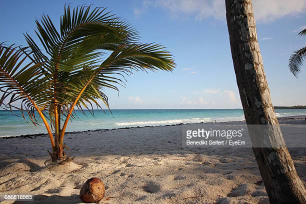 View Of Coconut And Palm Tree On Beach