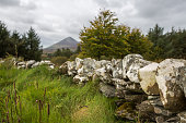 View of Croagh Patrick, County Mayo, with stone wall leading in and grass verges