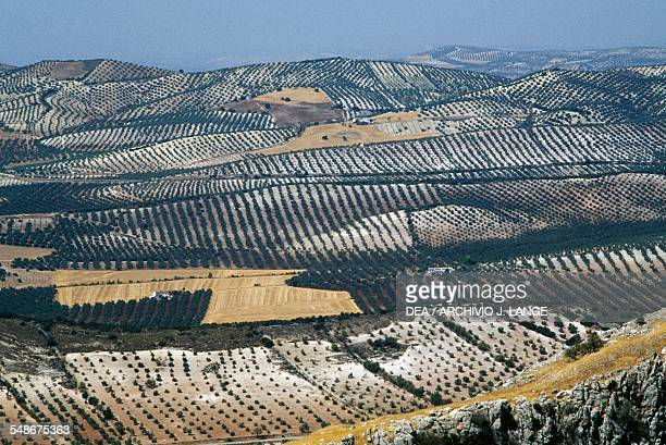 View of cultivated fields near Antequera Andalucia Spain