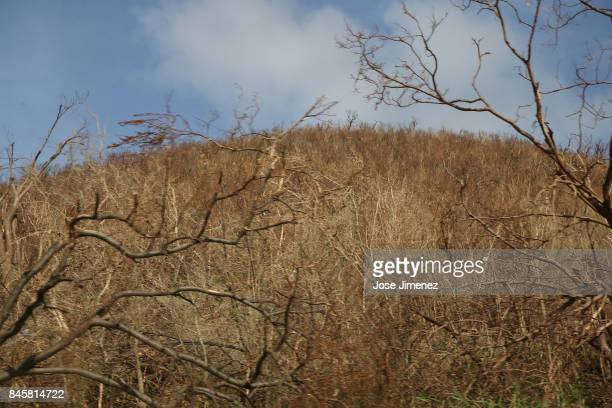 MAARTEN SEPTEMBER 11 View of damage to foilage in on September 11 2017 in Philipsburg St Maarten The Caribbean island sustained extensive damage from...