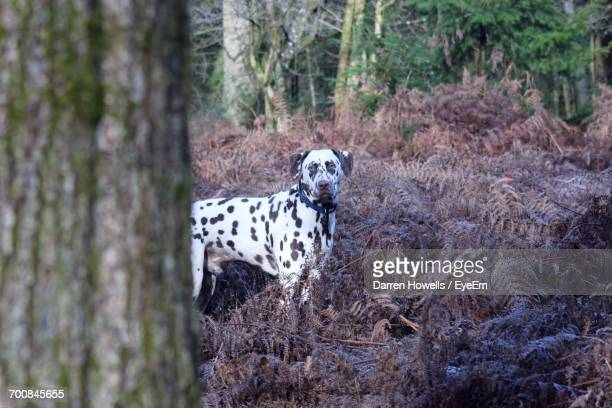View Of Dog On Tree Trunk