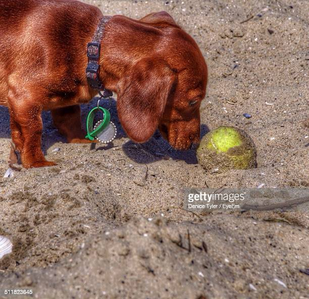 View of dog playing with ball on beach