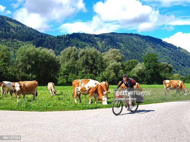 View of drau cycle path with biker and cows, Austria
