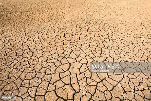 View of dried cracked mud on floodplain, Djoudj National Park, Senegal