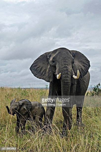 View Of Elephant With Calf In Field