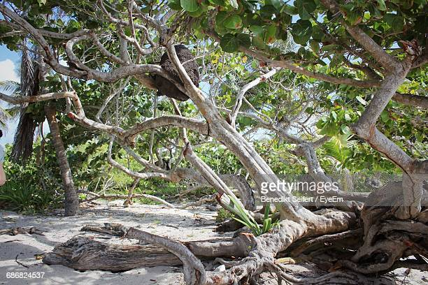 View Of Fallen Tree On Tropical Beach