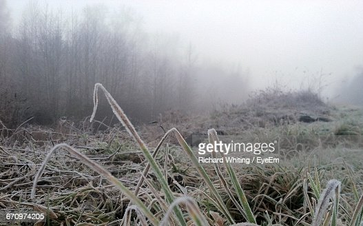View Of Field In Foggy Weather