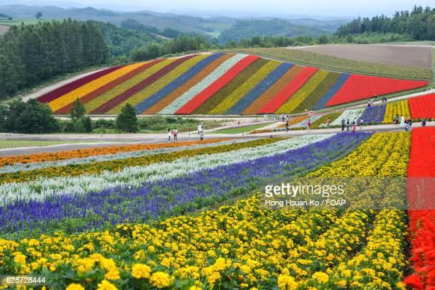 View of flowers garden in japan