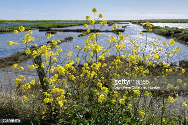 View Of Flowers In Pond