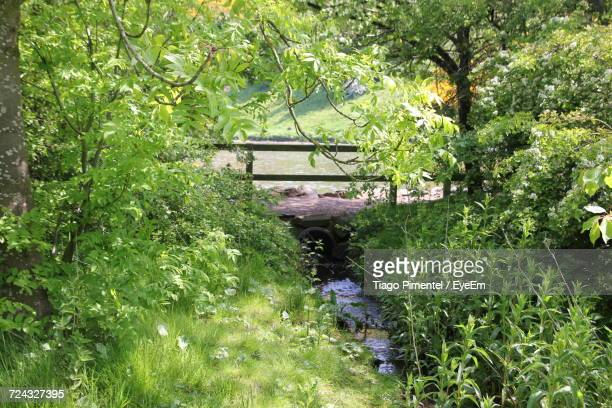 View Of Footbridge Over Stream In Forest