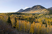 View of forest in autumn at foot of mountain