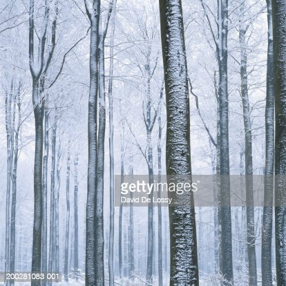 View of forest in winter, low angle view : Foto de stock