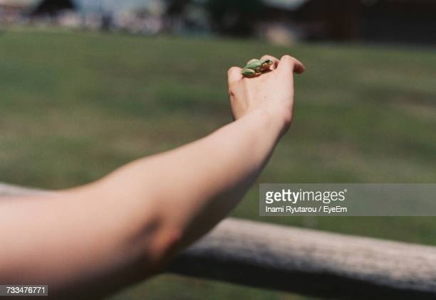 View Of Frog On Hand
