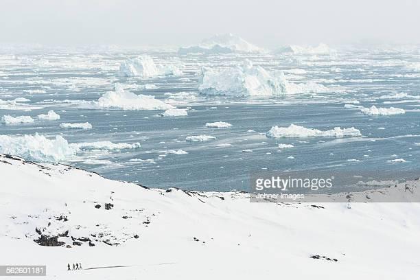 View of frozen sea
