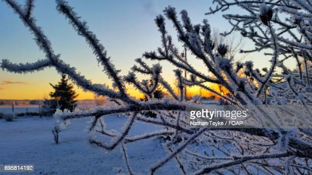 View of frozen trees during sunset