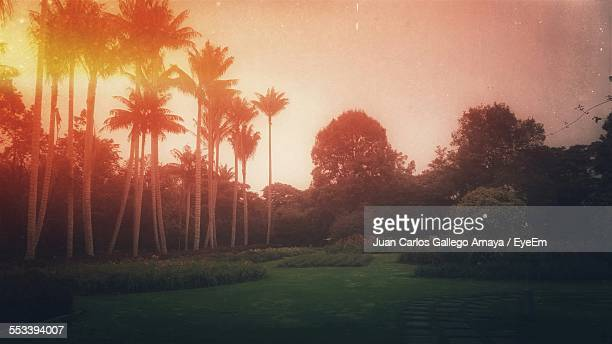 View Of Garden At Sunset