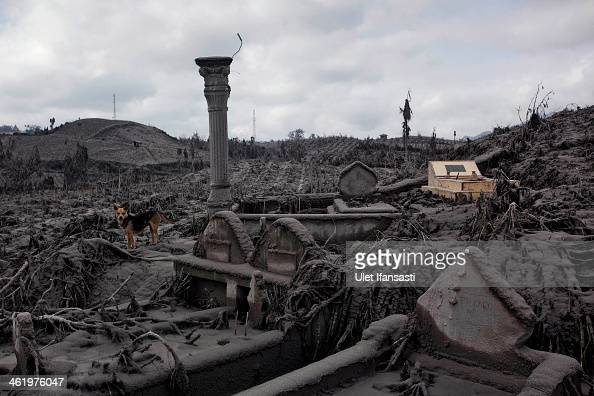 A view of graves and an area covered by ash after the village was hit by ash and mud from eruptions of Mount Sinabung on January 12 2014 in Sigarang...