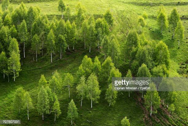 View Of Green Trees