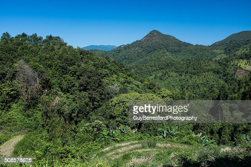 View of Jungle and rice paddy : Stockfoto