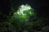 View of jungle from a limestone cave, Iriomote