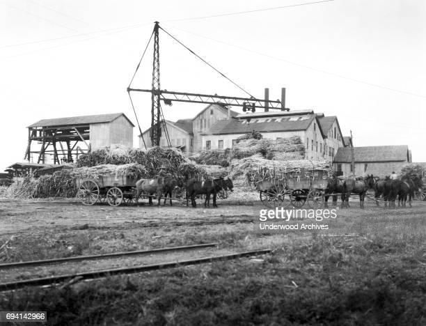 View of laden muledrawn sugar cane wagons lined up to be weighed at a sugar refinery Louisiana circa 1922