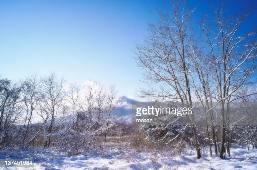 View of landscape in winter : Stock Photo