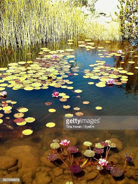 View Of Leaves Floating In Water