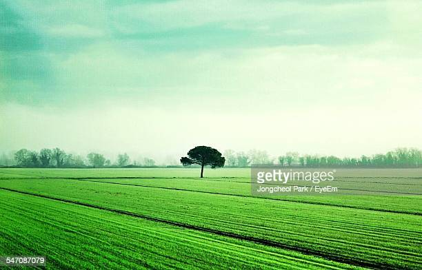 View Of Lone Tree On Countryside Landscape