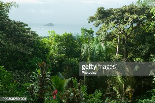 View of ocean through tropical vegetation, elevated view : Stock Photo