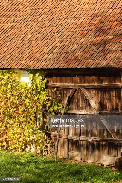 View Of Old Barn With Plant