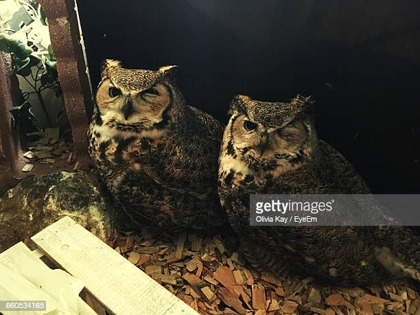View Of Owls Sitting