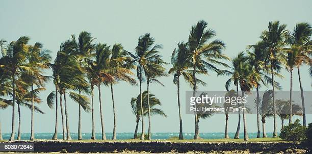 View Of Palm Trees On Calm Beach