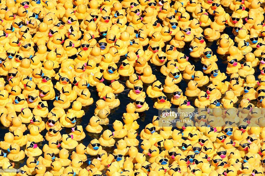 View of part of the twelve thousand rubber ducks during the 'The Great Rubber Ducky Race 2013' in the Nichupte Lake on Cancun resort on May 12, 2013. The race of ducks is organized by a civil association for good purposes and this year around 200 racing were called around the world. AFP PHOTO / Elizabeth Ruiz