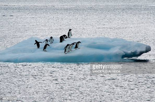 View of penguins on an ice block in front of Brazil's Comandante Ferraz base in Antarctica on March 10 2014 AFP PHOTO / VANDERLEI ALMEIDA