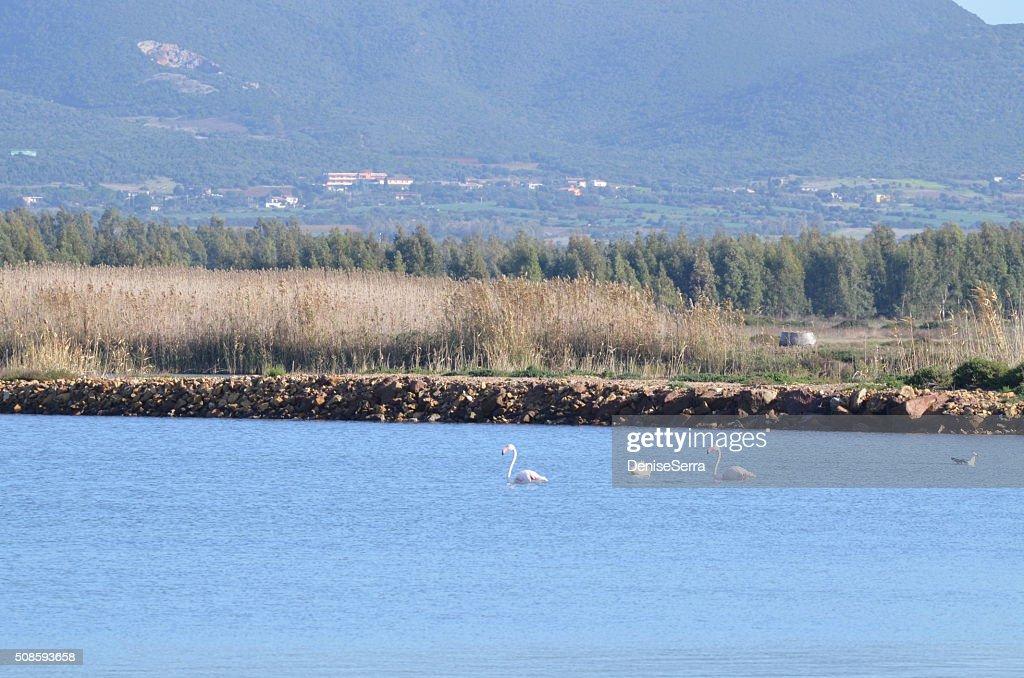 Vista de Porto Botte, Sardenha : Foto de stock