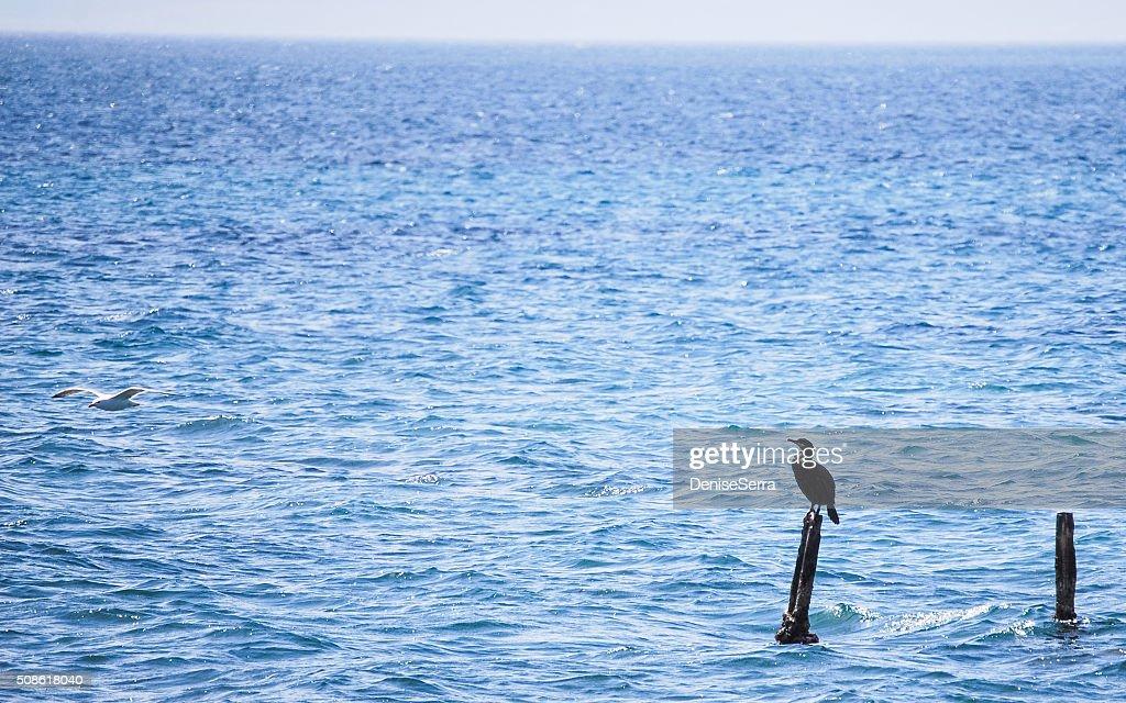 view of Porto Botte, Sardinia : Stock Photo