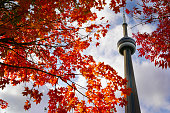 View of red maple tree and CN Tower in autumn on October