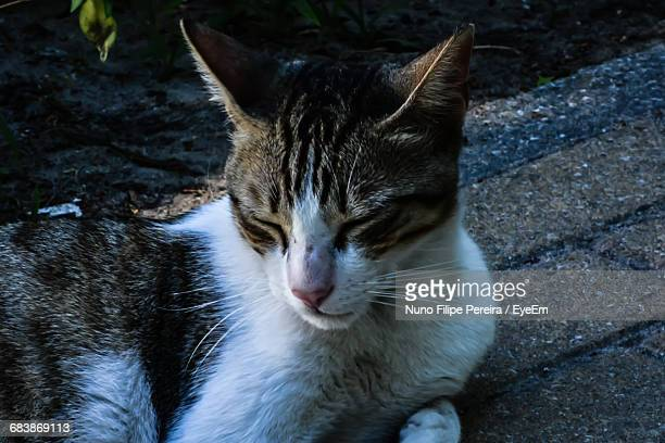 View Of Resting Cat