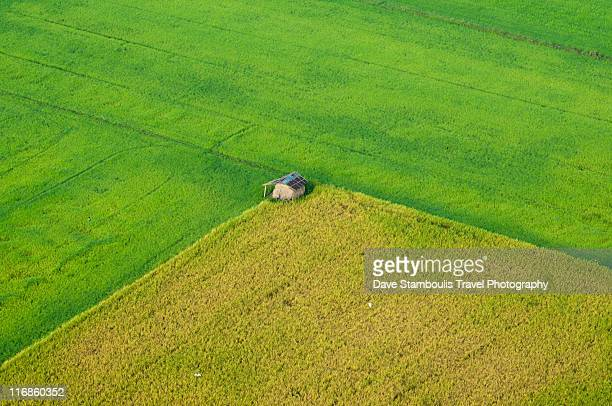 View of rice paddies from an air balloon