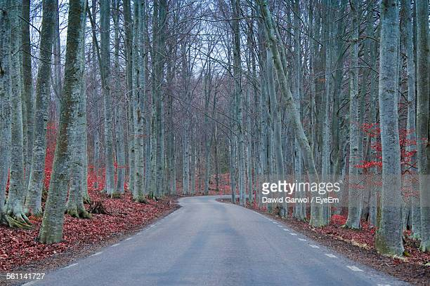 View Of Road Amidst Trees In Forest
