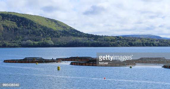 View of Salmon Farm in the Bay of Fundy, Canada : Stock Photo