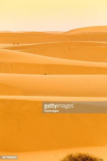 View of sand dunes at sunset in Tengger Desert
