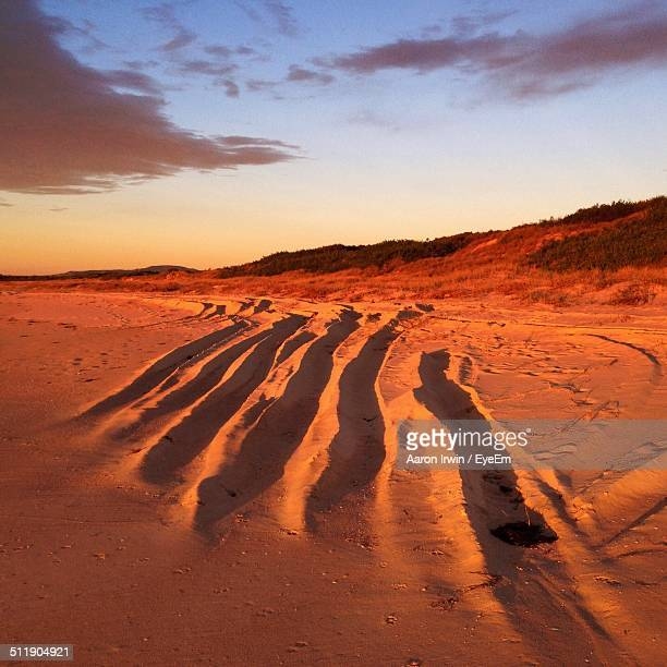 View of sandy beach and sand dunes at sunset