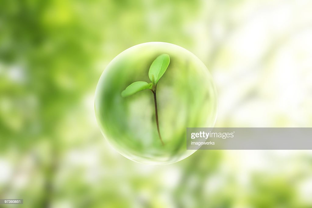 View of sapling through bubble : Stock Photo