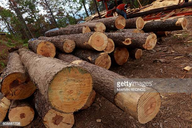 View of sawmill of pine trees affected by weevil plague in Perquin Morazan 210 kms northeast of San Salvador on September 14 2016 El Salvador is the...