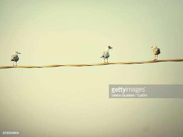 View Of Seagulls Perching On Line