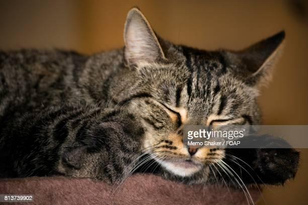 View of sleeping cat