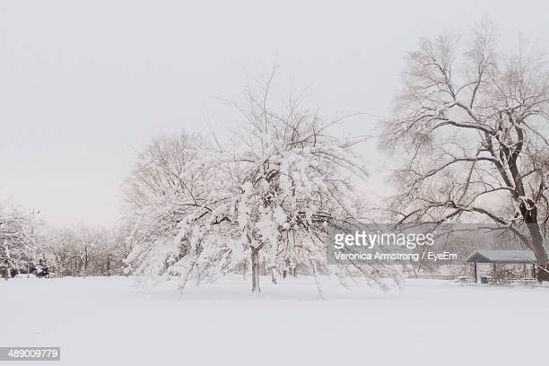 View of snow covered landscape and bare trees
