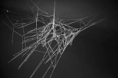 View Of Spider Web At Night